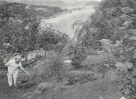 Man in early garden