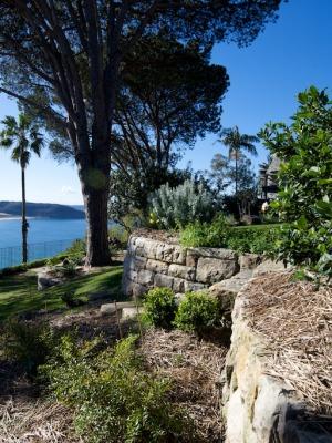 Stone Pine n the Palm Beach Bible Garden NSW